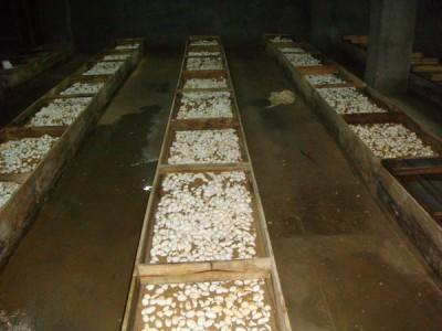 2014年眼镜蛇蛋孵化 (3)