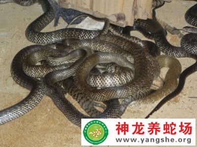 2013年的水律蛇大香蕉网伊人