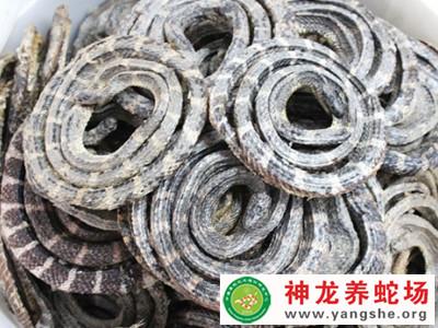 2011年生产的金钱小白花蛇