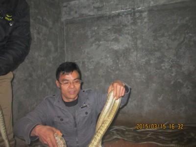 2015年3月份养蛇技术培训和蛇生长情况