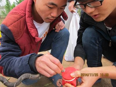 2015年4月份养蛇技术培训和蛇生长情况 (14)