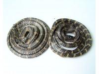 银环蛇蛇干