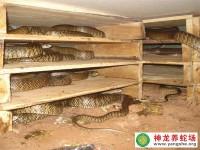 水律蛇养殖的蛇病防治