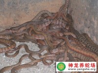 大王蛇控温饲养技术