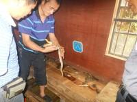 学员养殖大王蛇成功案例 (2799播放)