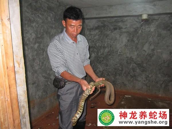 养蛇加盟,养蛇技术培训